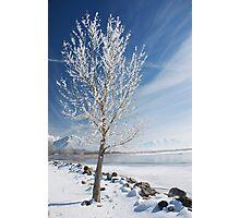 Lake Tree  Photographic Print