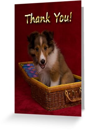 Thank You Sheltie Puppy by jkartlife
