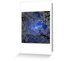 Moonlight Trees Greeting Card
