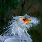 Secretarybird / Secretarisvogel by Jacqueline van Zetten