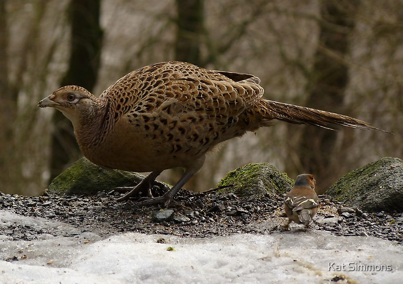 Female Pheasant and Friend by Kat Simmons