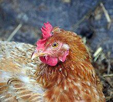pollo by pcfyi