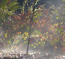 Evaporation Of An Element by HacksonStudios