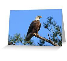 Bald Eagle, Jordan Lake, NC Greeting Card