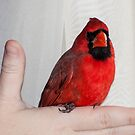 A Bird In The Hand by barnsis