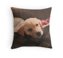 Crackers May Throw Pillow