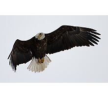 Adult American Bald Eagle in Flight 1 Photographic Print