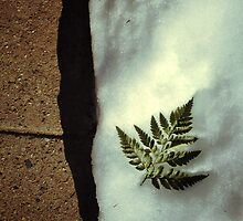 Snowleaf by stereognomes