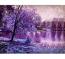 Lavender Landscape 1 - Franklin NJ, USA Photographic Print