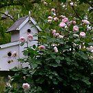Birdhouse with David Austin Rose - Mayor of Casterbridge by Gabrielle  Lees