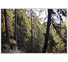 aletsch forest Photographic Print