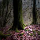 TAKE A LEAF OUT OF THE FOREST by leonie7