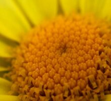 Macro Sunflower Sticker