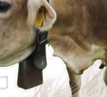 Milk cow in the field VRS2 Sticker