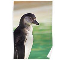 Portrait of a Penguin Poster