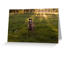 the horse and the sunset Greeting Card