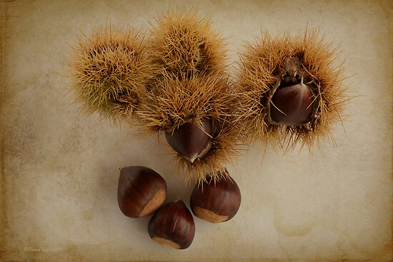 Chestnuts by Elaine Teague