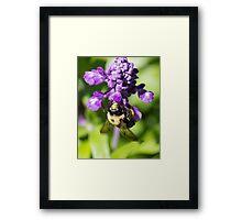 Bee 5 Framed Print