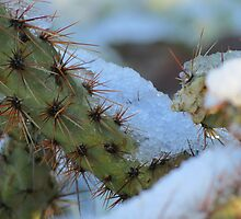 Chilled Prickly Pear Cacti by Kimberly Chadwick