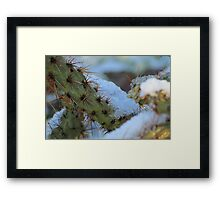 Chilled Prickly Pear Cacti Framed Print