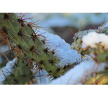 Chilled Prickly Pear Cacti Photographic Print