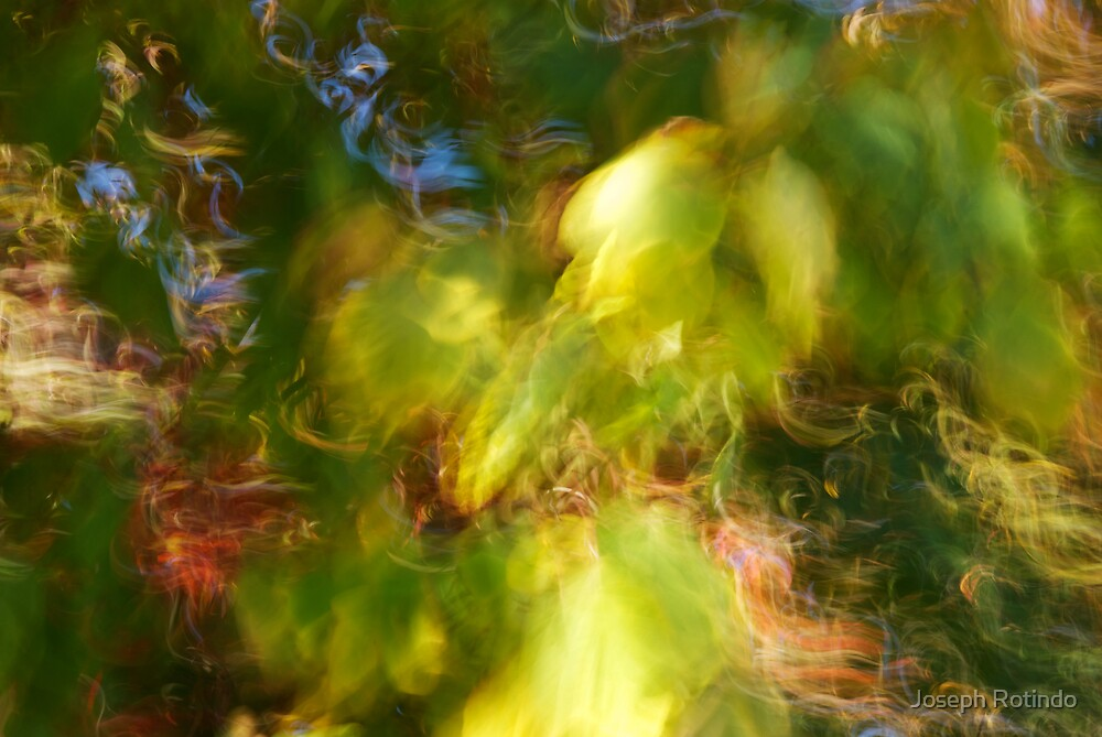 Fading green - 2012 by Joseph Rotindo