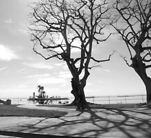 LBC TREES by DownByDfault
