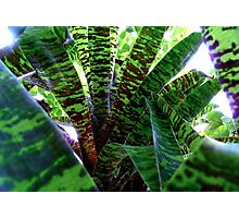 Green Galore Photographic Print