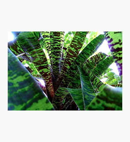 Green Galore Photographic Print