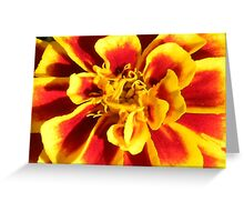 Yellow and Red Flower Close-Up Greeting Card