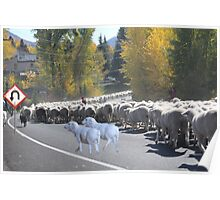 """Whadda ya mean you want to go back…..can't you read the sign????  It says 'No Ewe Turn"""" ! Poster"""