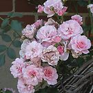 Antique Pink Roses by TCbyT