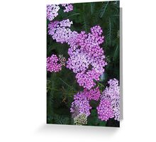Pink and White Small Flowers Greeting Card