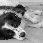 Shy Dog by Kaylee Uhlenkott