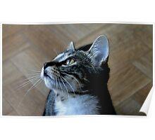 Whiskers on Kittens Poster