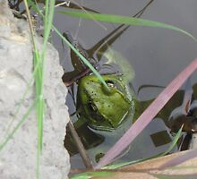 Frog Face by TCbyT