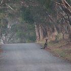 Australian Life by Stuart Daddow Photography