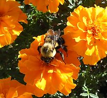 Bumble Bee on a Flower by TCbyT