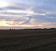 A Wheatfield Sunset by Stevie B