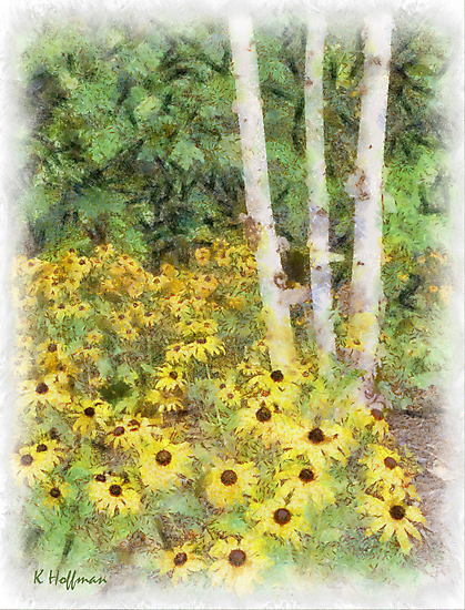 Daisy Field by Kenneth Hoffman