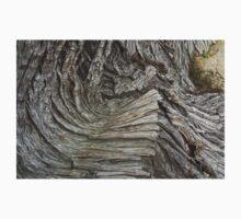 Cypress Root by mirjenmom