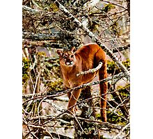 Treed Photographic Print