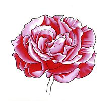 Pink Rose - Promarkers Photographic Print