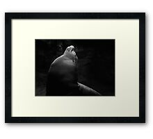 Fur Seal Framed Print