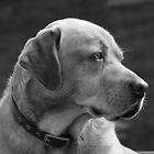 Portrait of a Dog by Lee LaFontaine