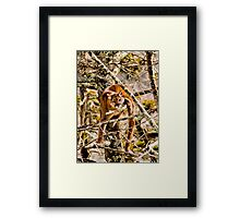 Treed II Framed Print