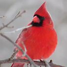 Seeing Red on a Gray Day by lorilee