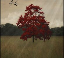 A TREE IN AUTUMN by TOM YORK