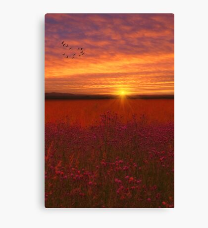 SCARLET FIELDS Canvas Print
