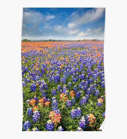 Bluebonnet Field near Whitehall, Texas Poster